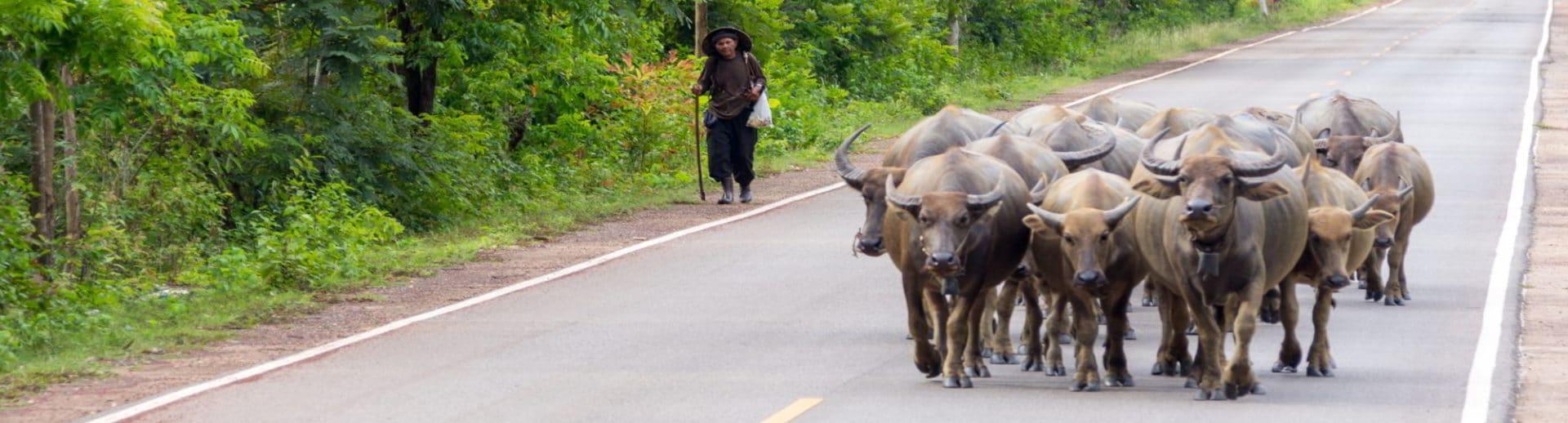Tim's Thailand