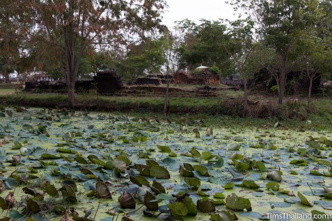 lotus-filled moat of Ku Buamat Khmer ruin