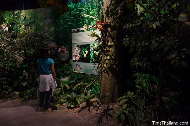 mock forest in Narathiwat City Museum