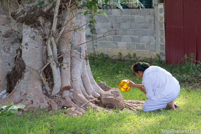 woman pouring water on the ground next to a tree