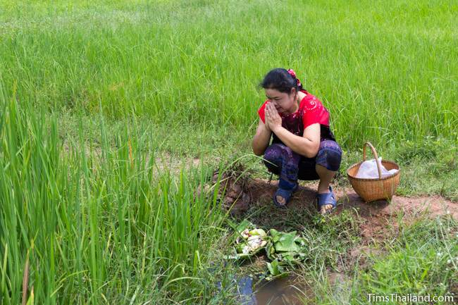 woman in rice field making food offering to spirits
