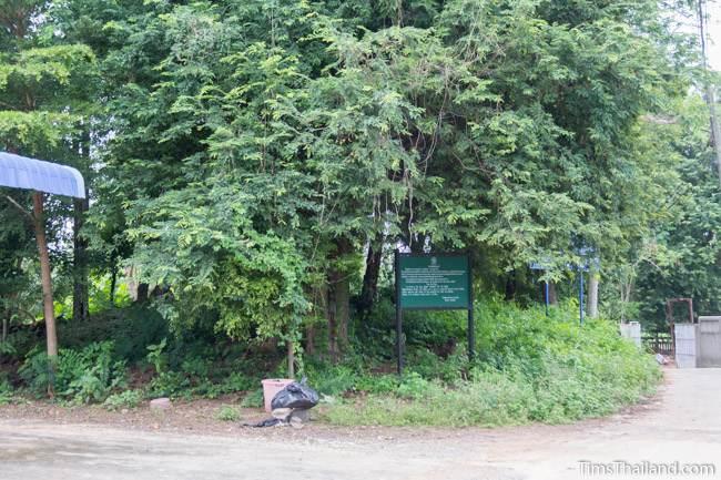 Prang Ban Prang Khmer ruin tree-covered mound
