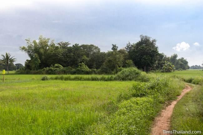 forest grove of Prang Sra Pleng Khmer ruin