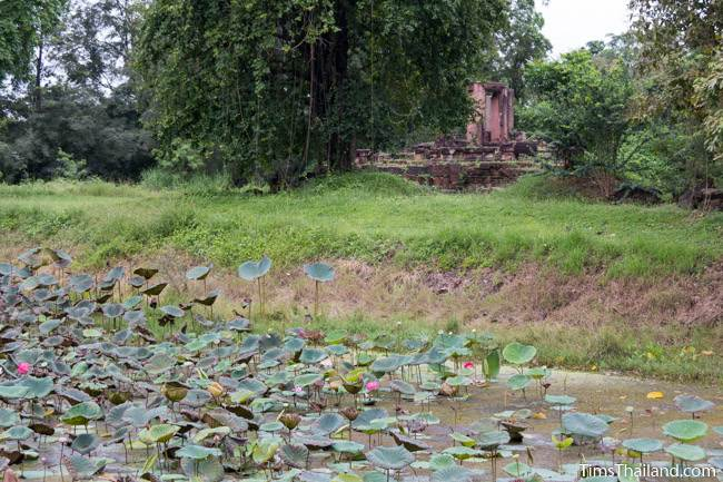 lotus-filled moat at Prang Phakho Khmer ruin