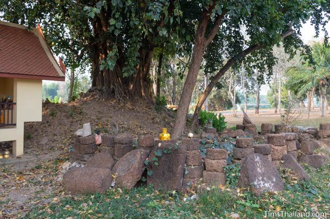 piles of laterite under a Bodhi tree