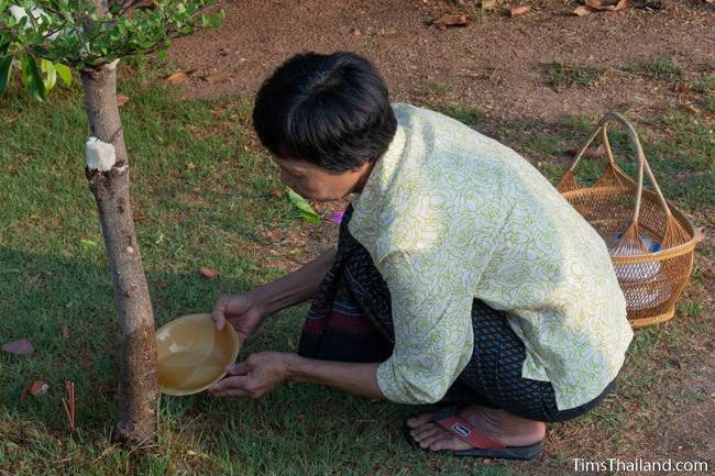 woman pouring water at the base of a tree