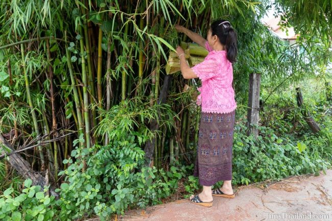 woman hanging kratong in bamboo tree