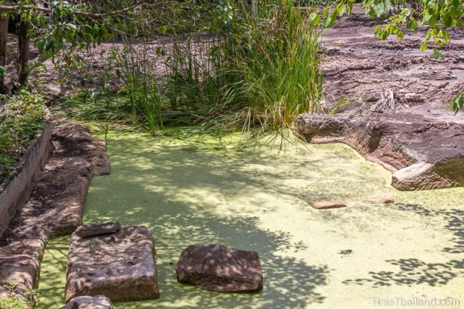 algae covered pond with cutting marks visible
