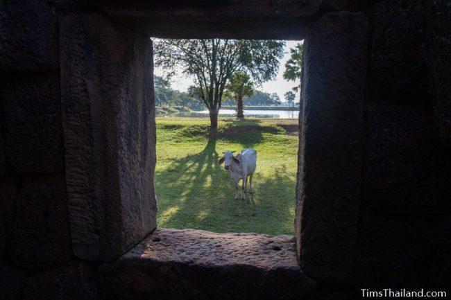 cow seen through gopura window