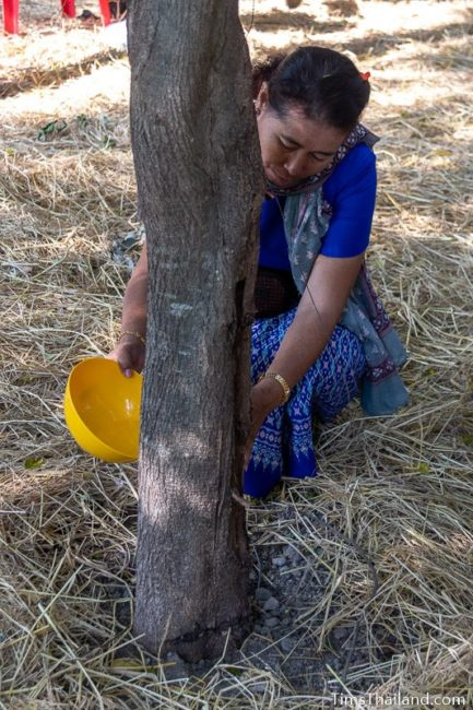 woman pouring water on a tree