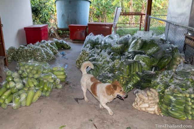 dog walking amidst bags of vegetables