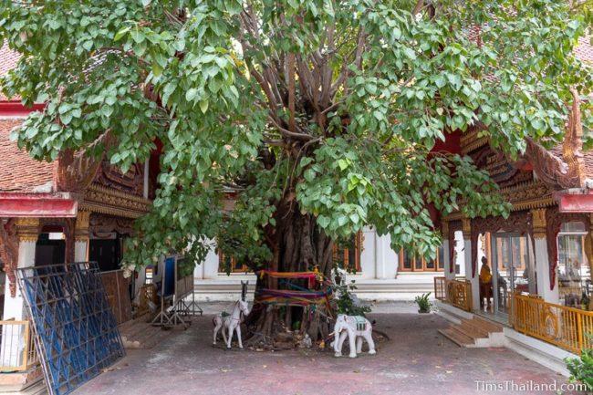 tree growing between the wihans