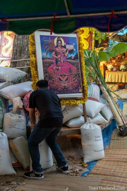 man putting Mae Phosop picture on the rice pile