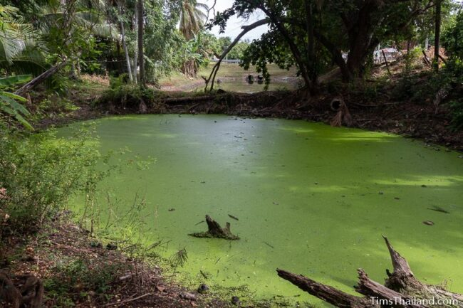 section of moat covered with green algae