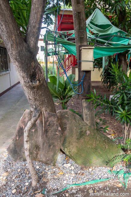 two bai sema under a tree