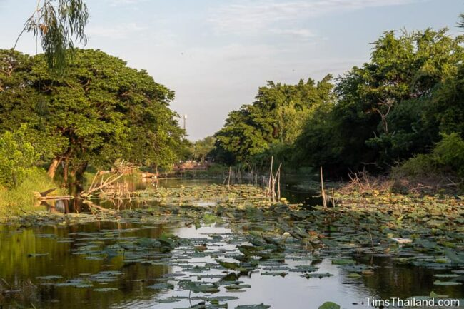 moat with many lily pads