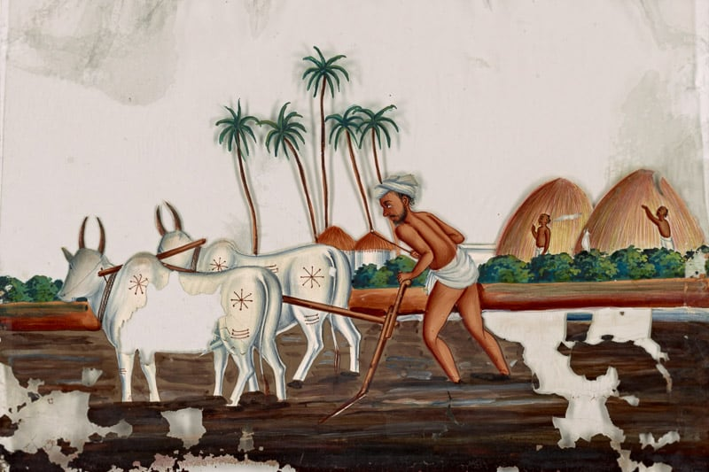 historic painting from India of man plowing field with two oxen