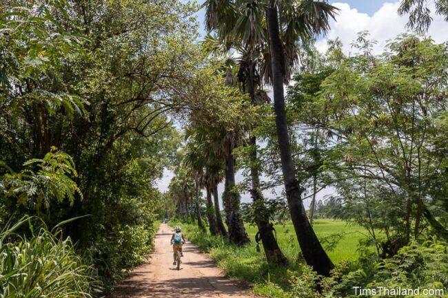 woman riding bike past suag palms and rice paddies