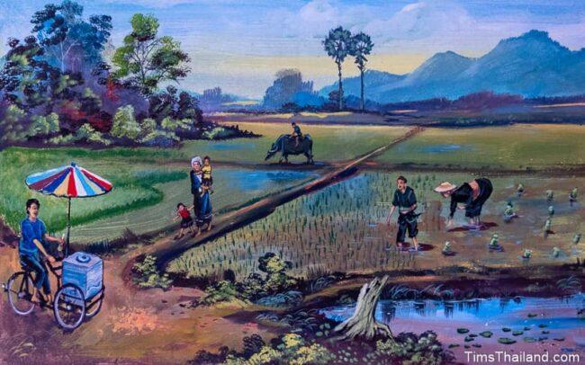 people in rice paddies