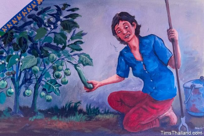 woman picking eggplants